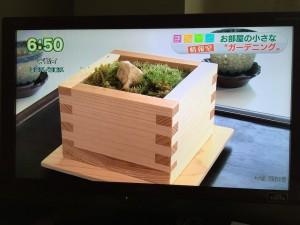 [メディア掲載・こけだま]広島ホームテレビ(2015.6.15)地球派宣言・広島のこどもたちと広島産の赤松と苔で作るひろしまスペシャルこけだまづくり!
