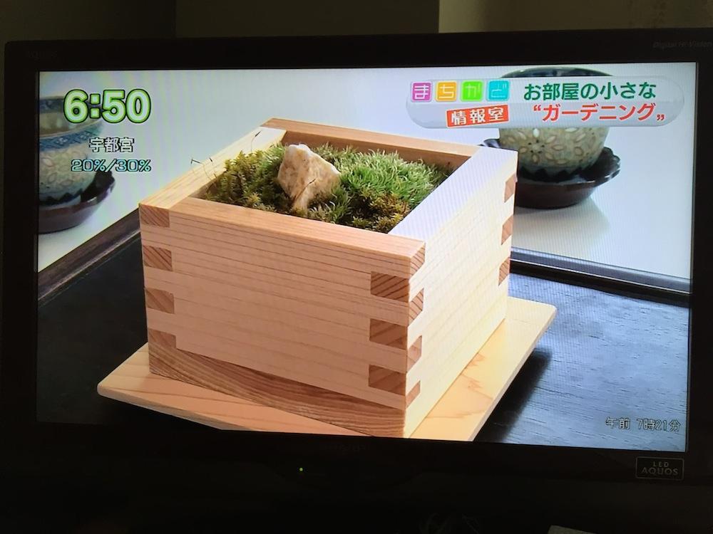 [メディア掲載]NHK「おはよう日本」まちかど情報室(2015.6.17)ヒノキの枡に石や砂を敷いてコケを育てるキット