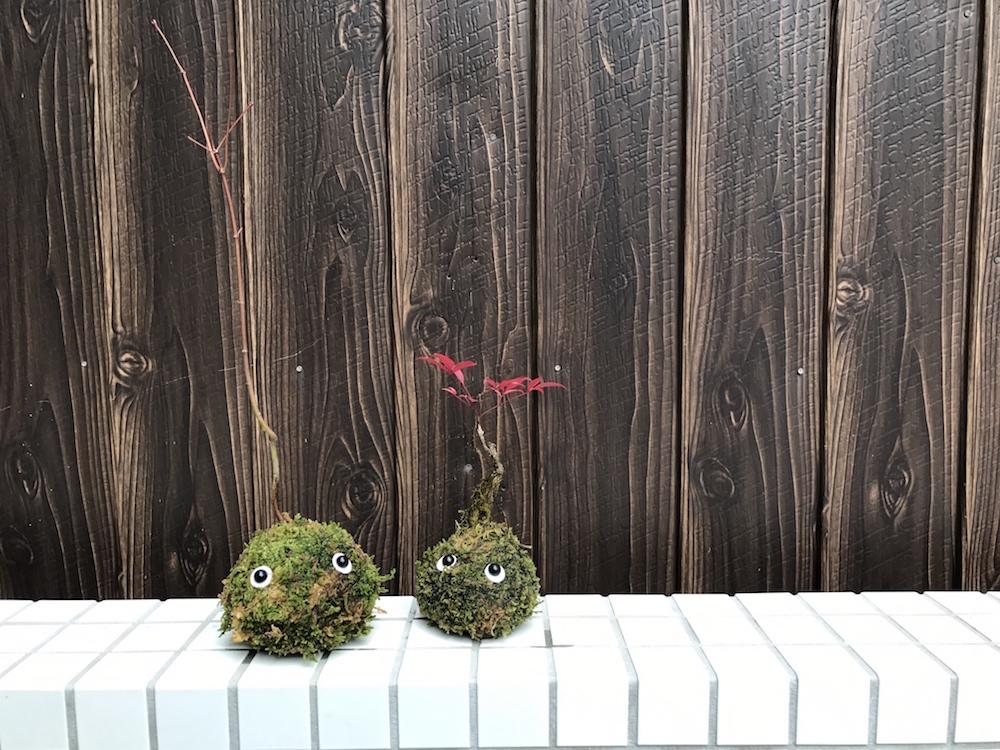 WS info:丸ビルで広島の里山を感じる?!?里山こけだま作り「ひろしま さとやま未来博 2017 プレミアムセッションin東京」(3/16)